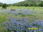 Cycling Texas Llano Country during bluebonnet season