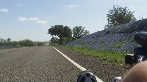 Bluebonnets in Llano County - March of 2012