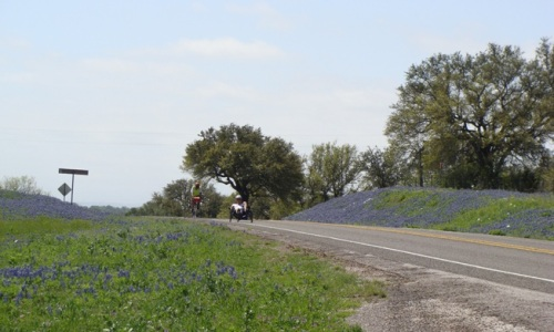 Wildflowers in llano County 2012