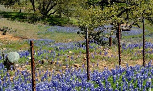 Texas wildflowers in 2012
